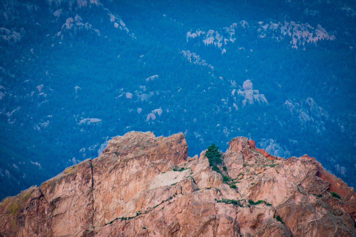 Lone tree on top of a Garden of the Gods formation.